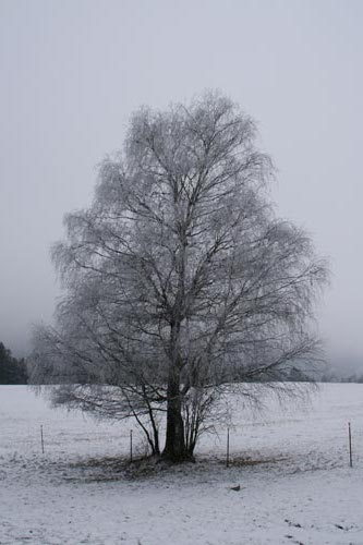 04_Winter2010_05