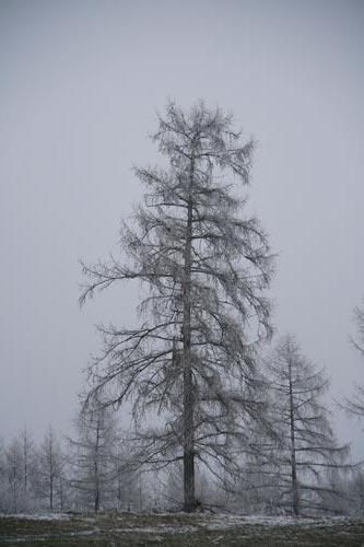 06_Winter2010_10