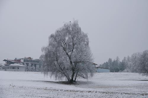 09_Winter2010_16