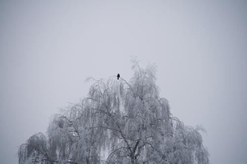10_Winter2010_18