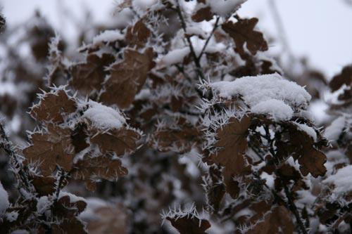 Winter2010-0-09_30