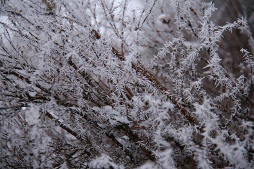 Winter2010-0-09_34