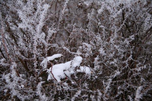 Winter2010-0-09_35