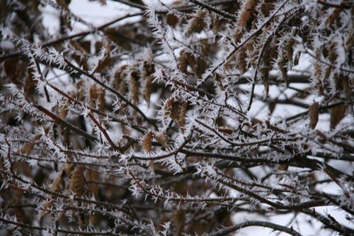 Winter2010-0-09_37