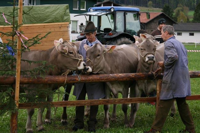 Viehzucht2010_14