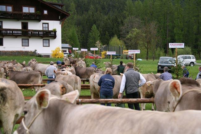 Viehzucht2010_20
