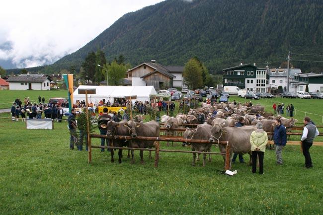 Viehzucht2010_28