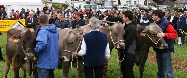 Viehzucht2010_50