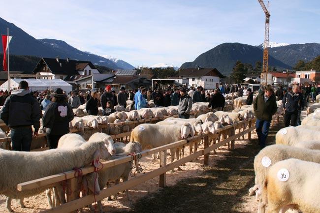 SchafausstellungUM2011-02-06_15
