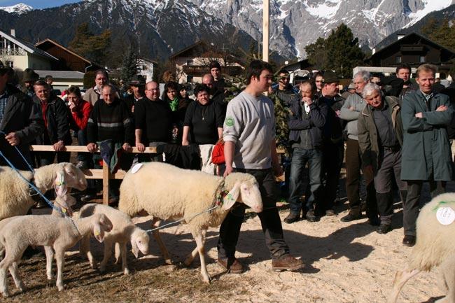 StriglDaniel2011-02-06_4