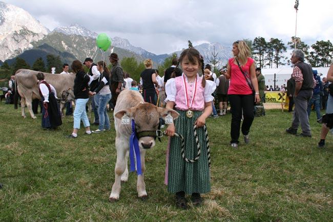 BraunviehMieming2011-04-30_12