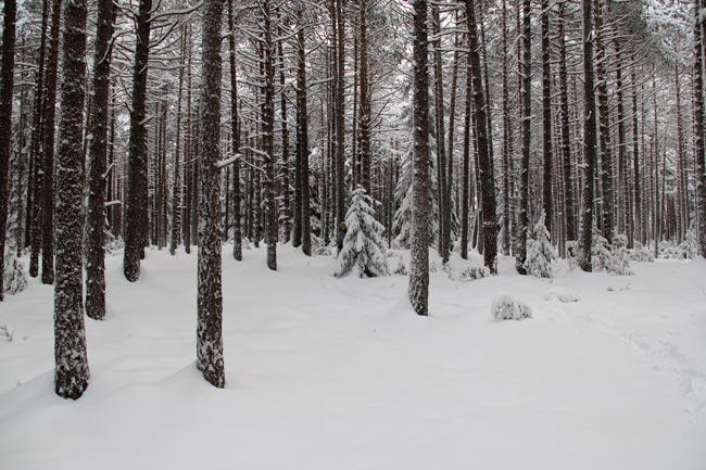 Winter2011-12-30_01