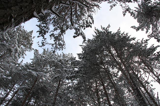 Winter2011-12-30_03