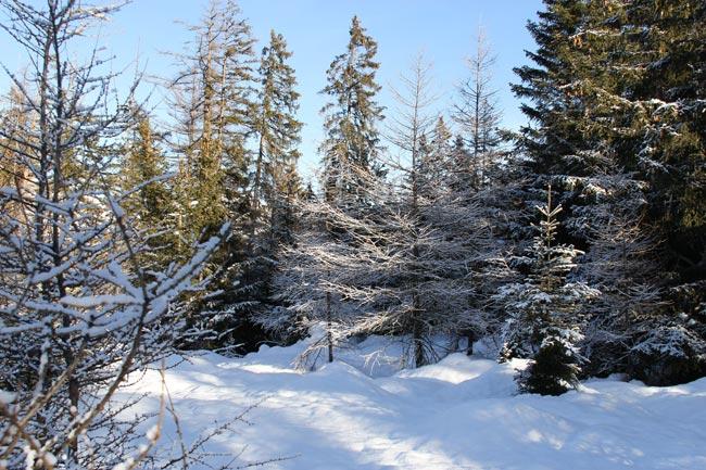 Winter2012-01-03_4