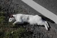00 Katze2012-09-21