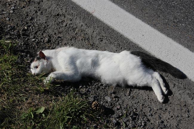 Katze2012-09-21
