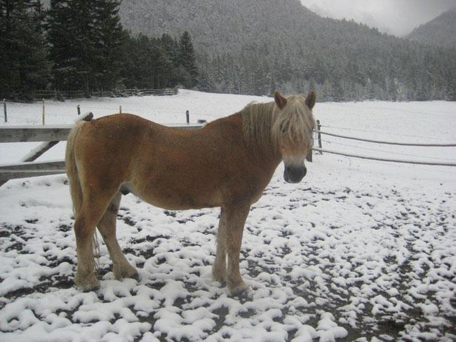 Pferde2012-10-28 2Fitsch