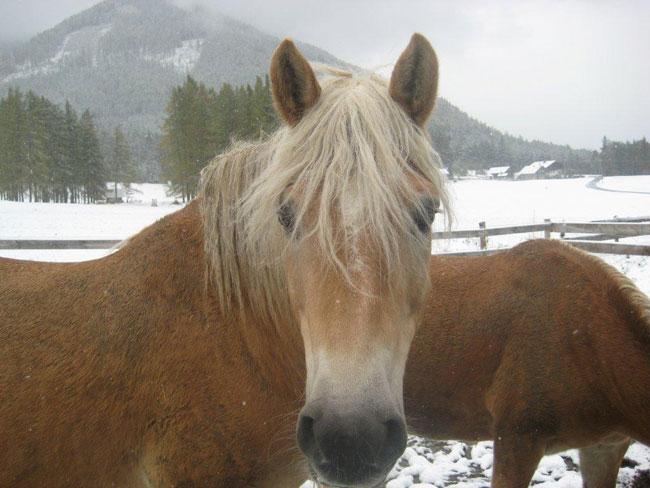 Pferde2012-10-28 4Fitsch