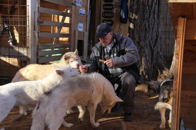 HuskiesHaselwanter2012-11-17 07
