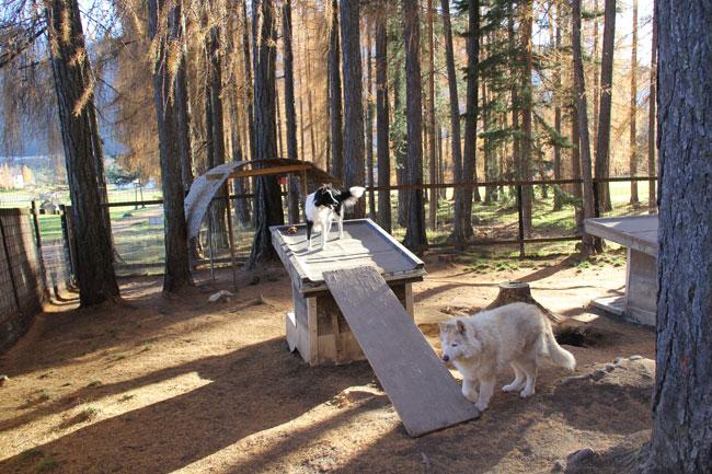 HuskiesHaselwanter2012-11-17 22