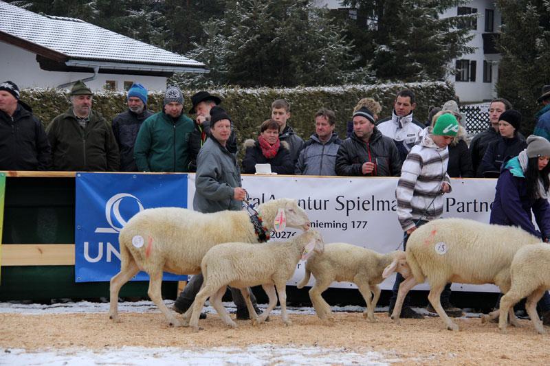 SZV-Barwies2014 24