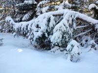 00 Winter2014-01-26  02