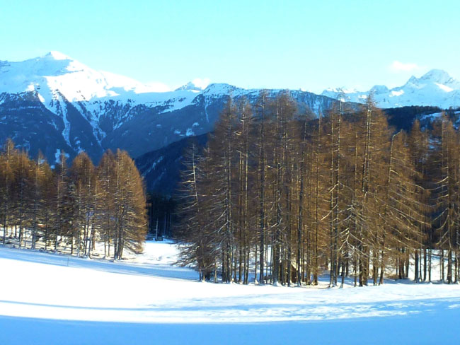 Winter2014-01-26  19