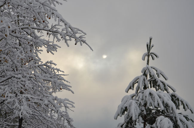 Winter  12FalknerG