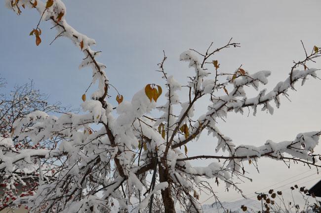 Winter  28FalknerG