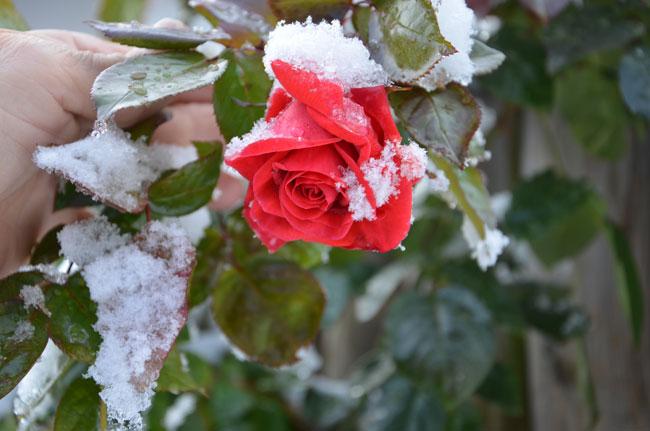 Winter  32FalknerG
