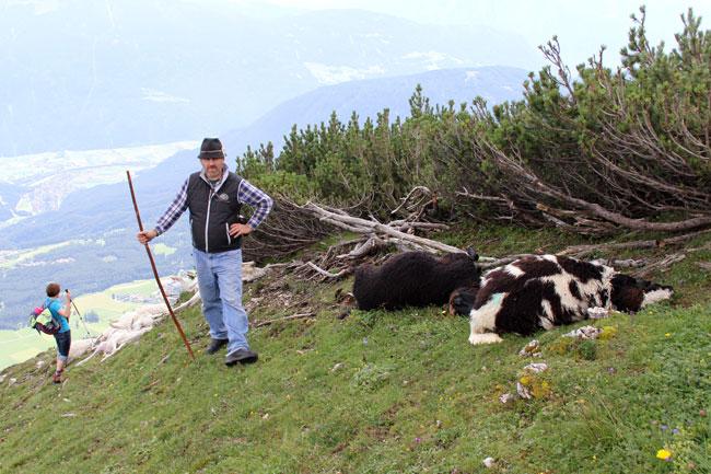 Schafe-Wank-Blitzschlag2016-08-07_02