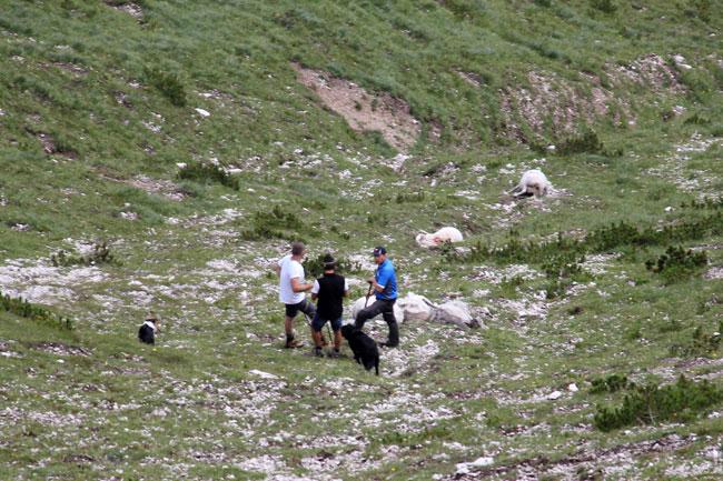 Schafe-Wank-Blitzschlag2016-08-07_13