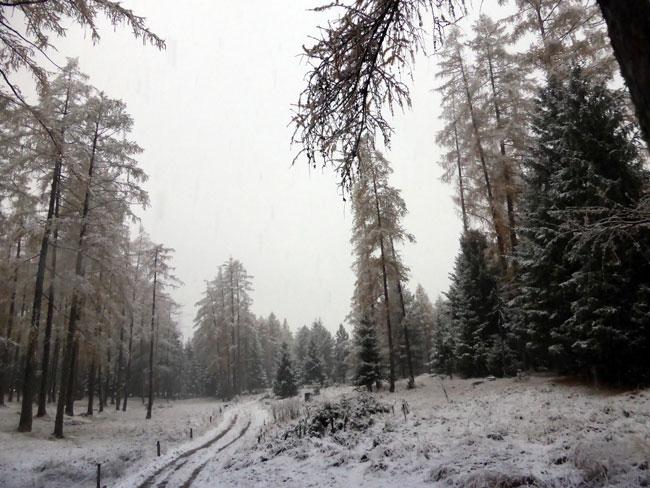 schneefall2016-11-06_08