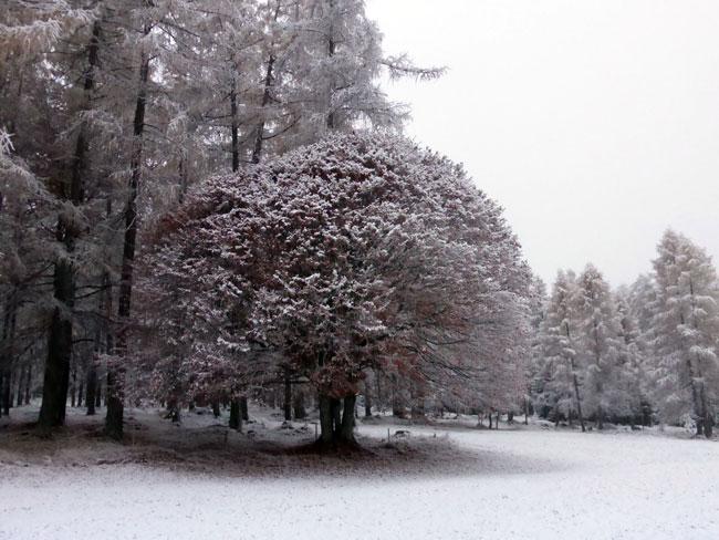 schneefall2016-11-06_23